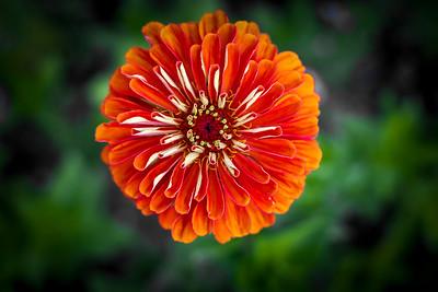 flowers17-012