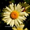 WNC Flowers0004