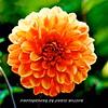 WNC Flowers0012
