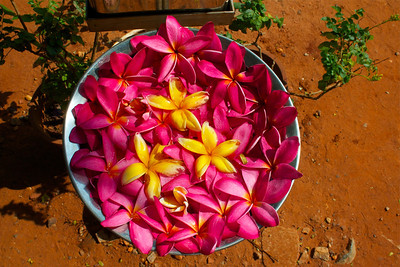 Flowers in Auroville