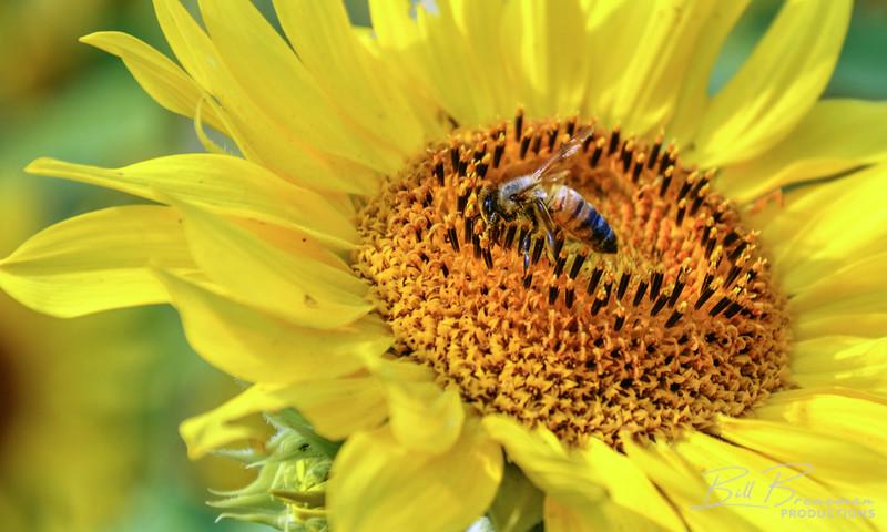 Flower 144