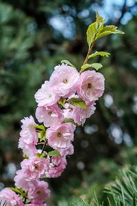 spring branch-005