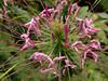 <center><b>Unknown Flower</b></center>