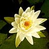 WNC Flowers0005