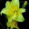 WNC Flowers0008