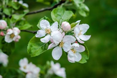 spring branch-002