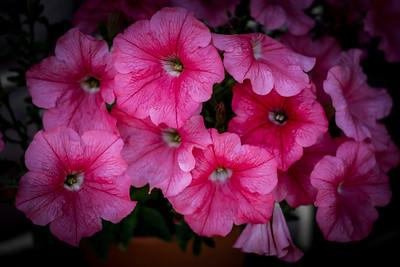 flowers17-014