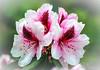 Flower 73