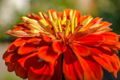 flowers17-005