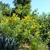 Los Angeles Botanical Gardens 10