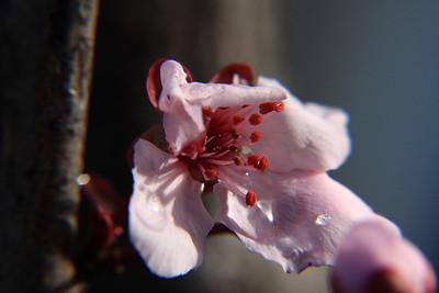 AndolinaPhotography0069