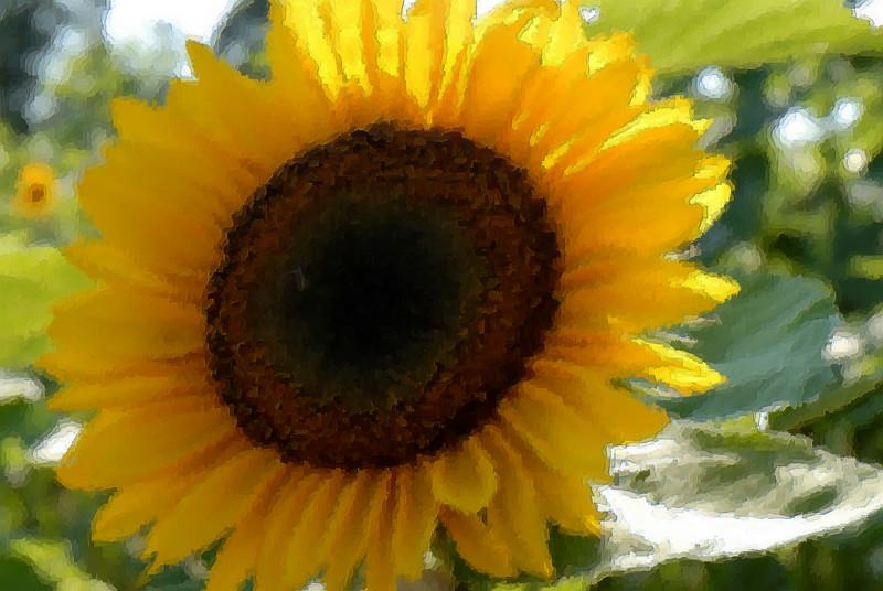sunflower art 2