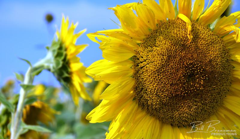 Flower 143