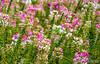 Flower 150
