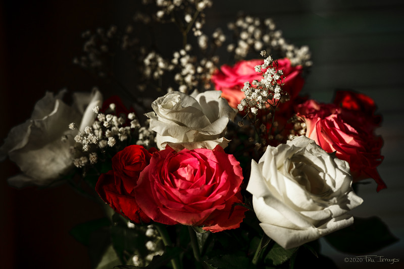 Roses + Sunlight = Pretty