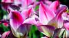 Flower 206