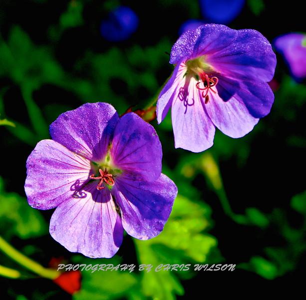 WNC Flowers0015
