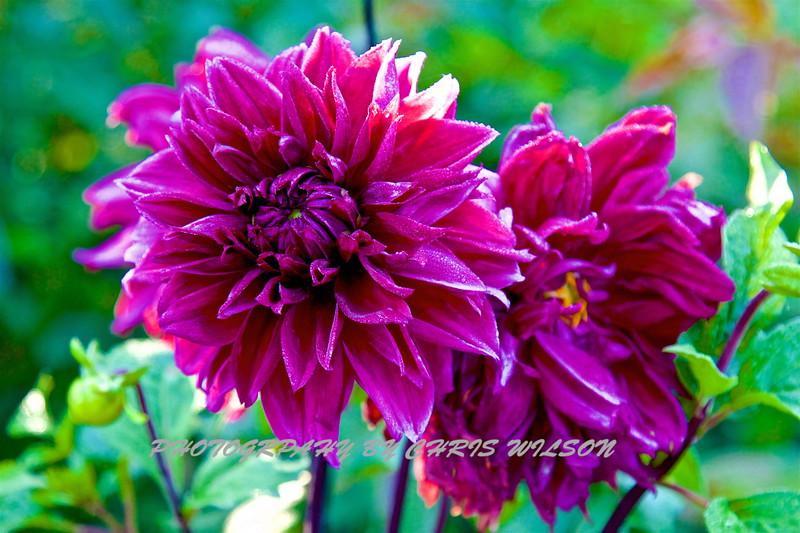 WNC Flowers0013