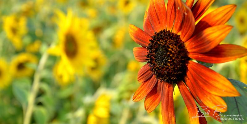 Flower 146