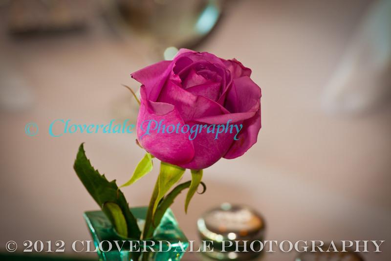 Rose_2872 (1 of 1)