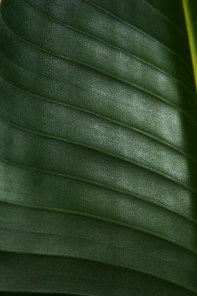 Leaf IMG_4078