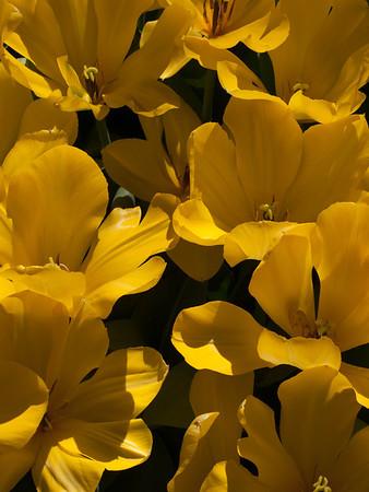 <center><b>Flower Pattern</b></center>