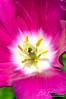 Flower 151