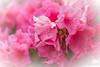 Flower 221
