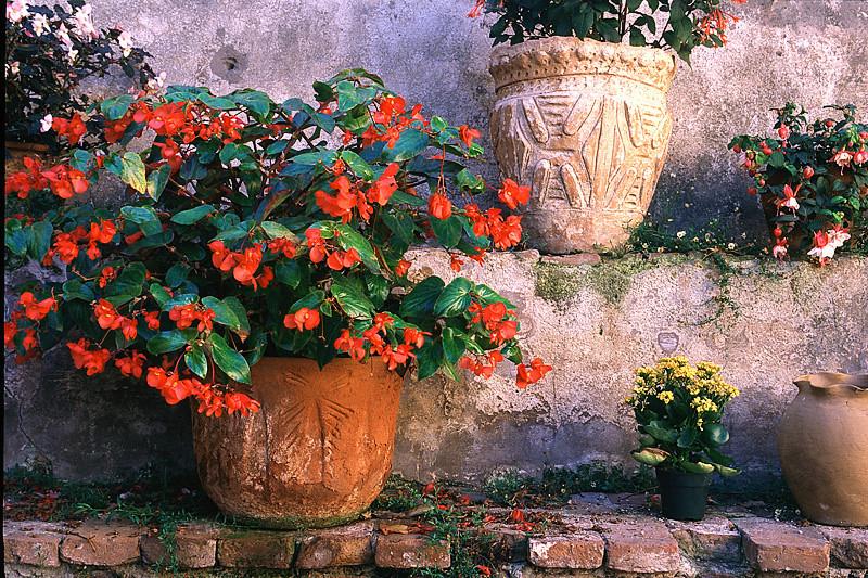 Secret Garden - Mission San Juan Capistrano