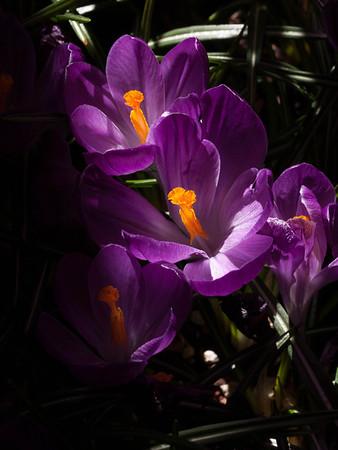 <center><b>Backlit Flowers</b></center>