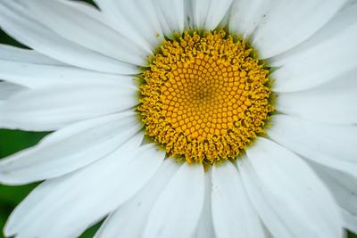 flowers17-004