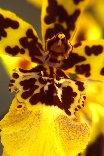 Yellow Orchid, 2001<br /> Film Photography