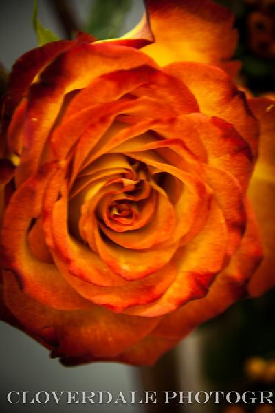 Bazzar_Flower_Show-3721