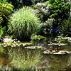 Lily pond at Huntington Library gardens in Pasadena California 10