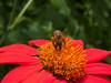 <center><b>Bee on a flower</b></center>