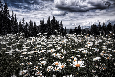 Cloudy Day Meadow in Black and White