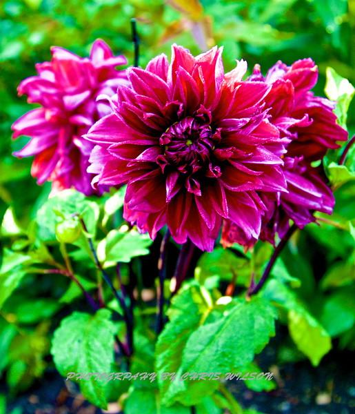 WNC Flowers0014