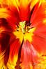 Flower 207