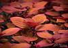Flower 222