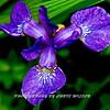WNC Flowers0007