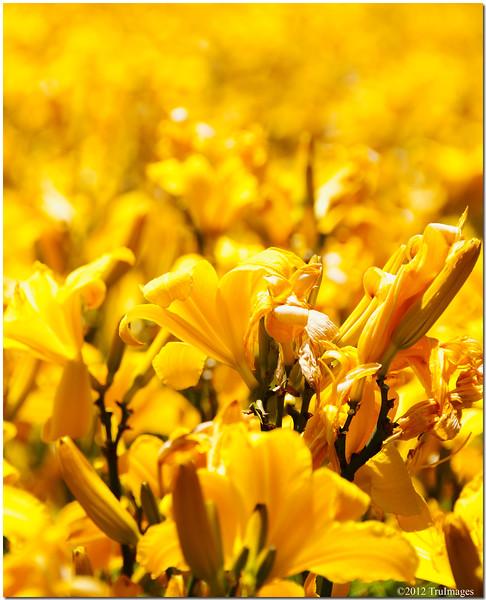 Jun 17<br /> Wildflowers circle of life