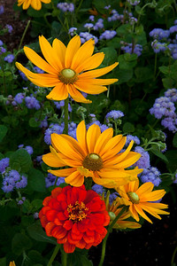 Yellow, red and purple flowers