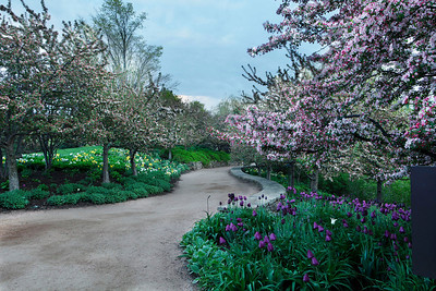 Spring path, Chicago Botanic Garden