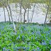 Bluebells Botanic Garden 0183