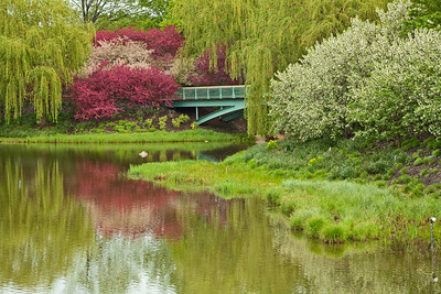 Crabapple trees and willows, Chicago Botanic Garden
