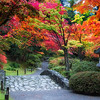 Autumn Kaleidoscope<br /> Japanese Garden, Arboretum<br /> Seattle, Washington