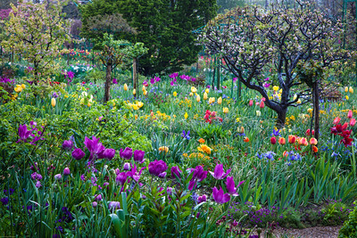 Spring has Sprung! Monet's Garden, Giverny, France