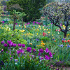 Spring has Sprung!<br /> Monet's Garden, Giverny, France