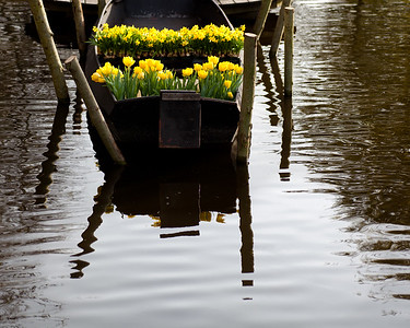 Floating Daffodils Keukenhof Gardens, The Netherlands