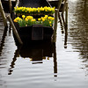 Floating Daffodils<br /> Keukenhof Gardens, The Netherlands